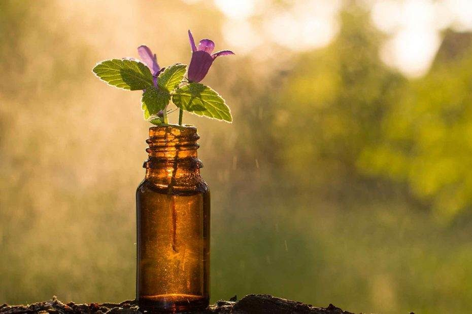 local seo study melbourne naturopath industry